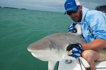 Black tip shark caught in Key West while fishing the surrounding islands