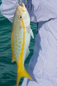 Yellow tail snapper caught in Key West
