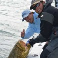 Goliath grouper with Capt. Kyle Kelso