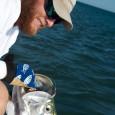 Tarpon fishing with Capt. Kelso