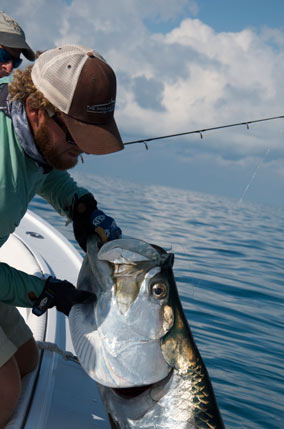 Key West tarpon caught fishing with Capt. Kelso
