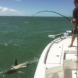 shark fishing key west