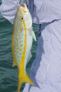 Yellowtail snapper caught in Key West