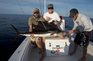 Sailfish caught south of Key West