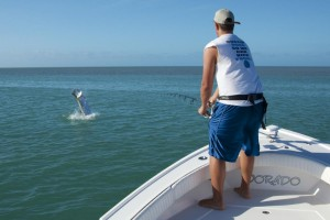 Tarpon Jumping in Key West