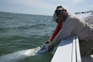 Key West harbor tarpon being released