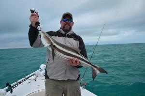 Cobia caught in Marquesas